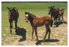 Danzigs_bride_and_07_foal